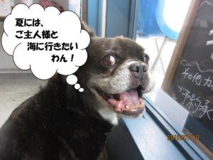 窓際笑顔ミックス犬