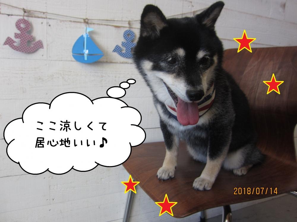 うつむき笑顔黒柴犬