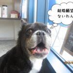 窓際ミックス犬