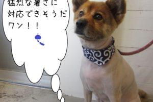 すっきりミックス犬