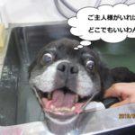 スパ中笑顔ミックス犬