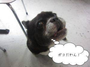 施術前ミックス犬