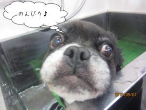 スパ中のんびりミックス犬