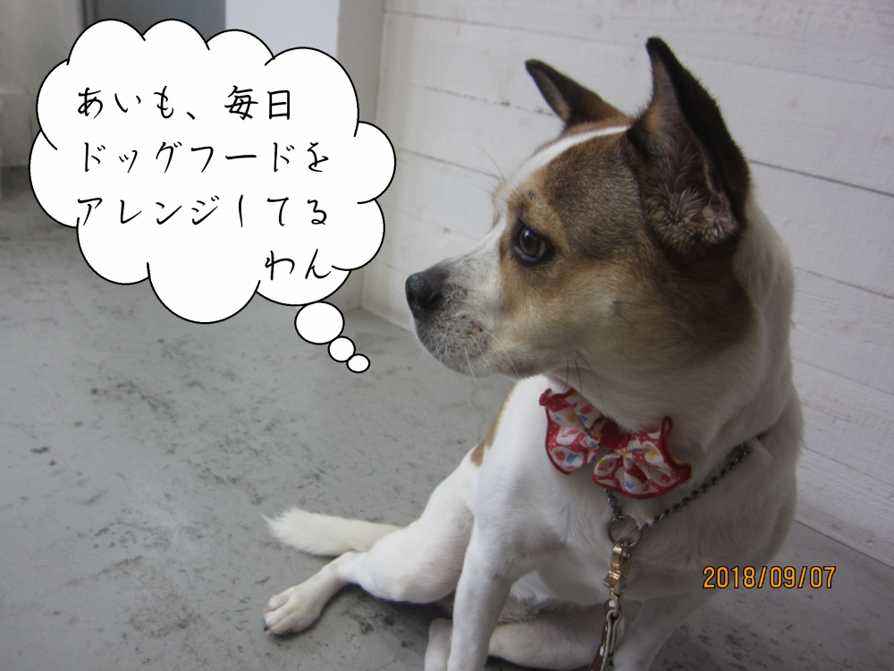 横顔ミックス犬