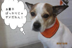 ハロウィンバンダナのミックス犬