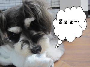 寝ているベルちゃん