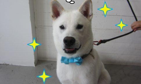 おすわり紀州犬