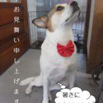 上向きミックス犬