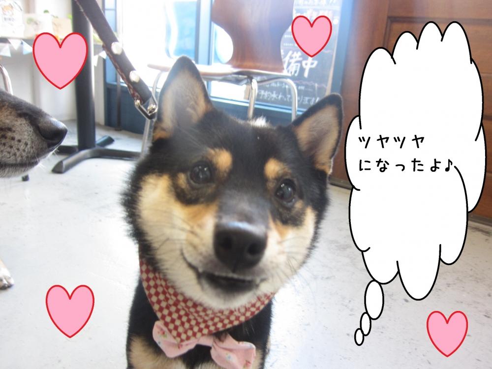微笑み柴犬