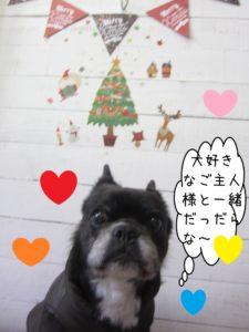 クリスマスおすましミックス