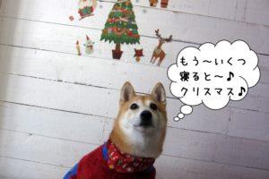 クリスマスのんびり柴犬