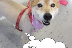 笑顔ミックス犬