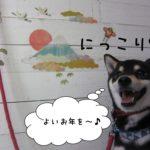 富士山にっこり黒柴犬