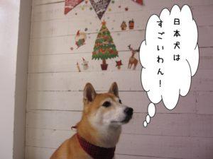 クリスマスおすまし豆柴