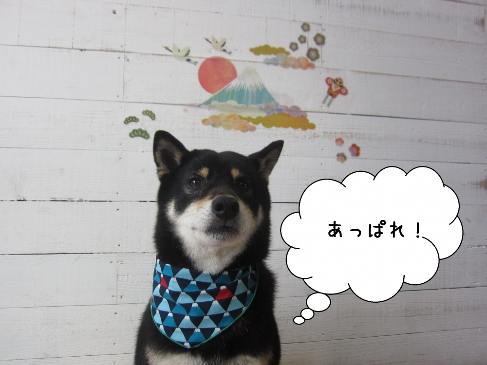 富士山前柴犬