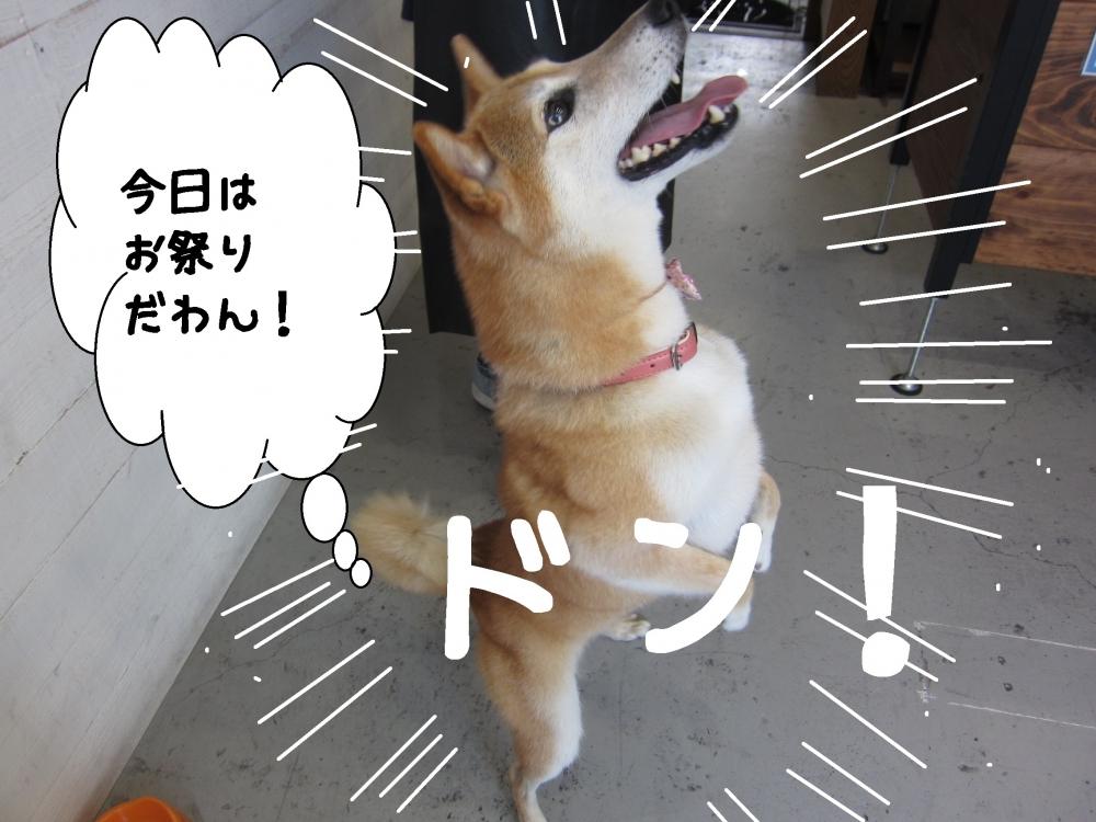 ジャンプ柴犬