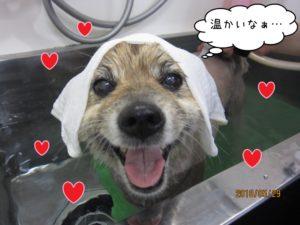 スパ中ミックス犬