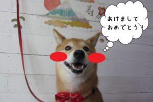 あけましておめでとう柴犬