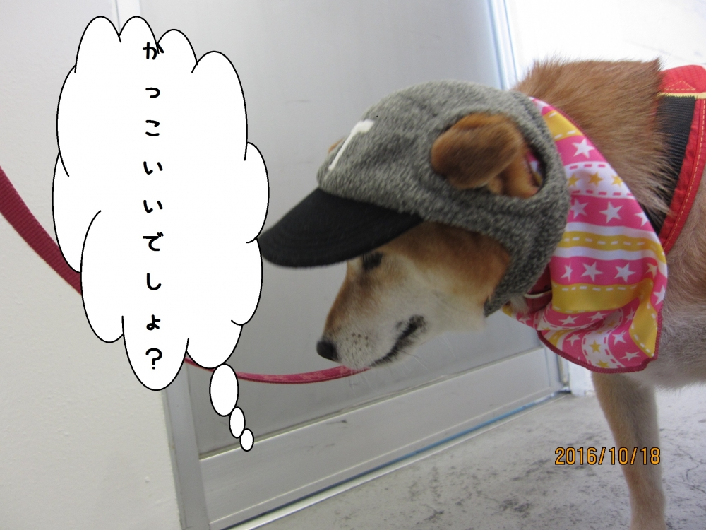お洒落柴犬
