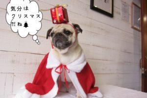 サンタさんパグ