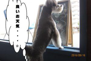 窓際Mシュナ