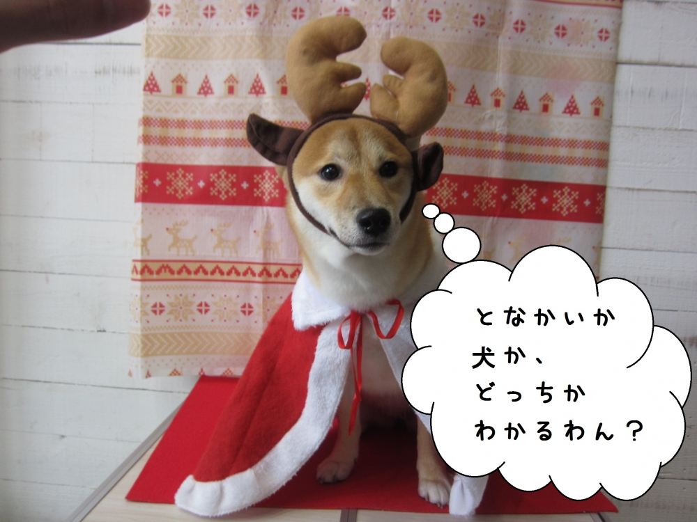 トナカイさん柴犬