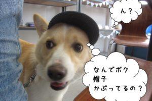 帽子ミックス