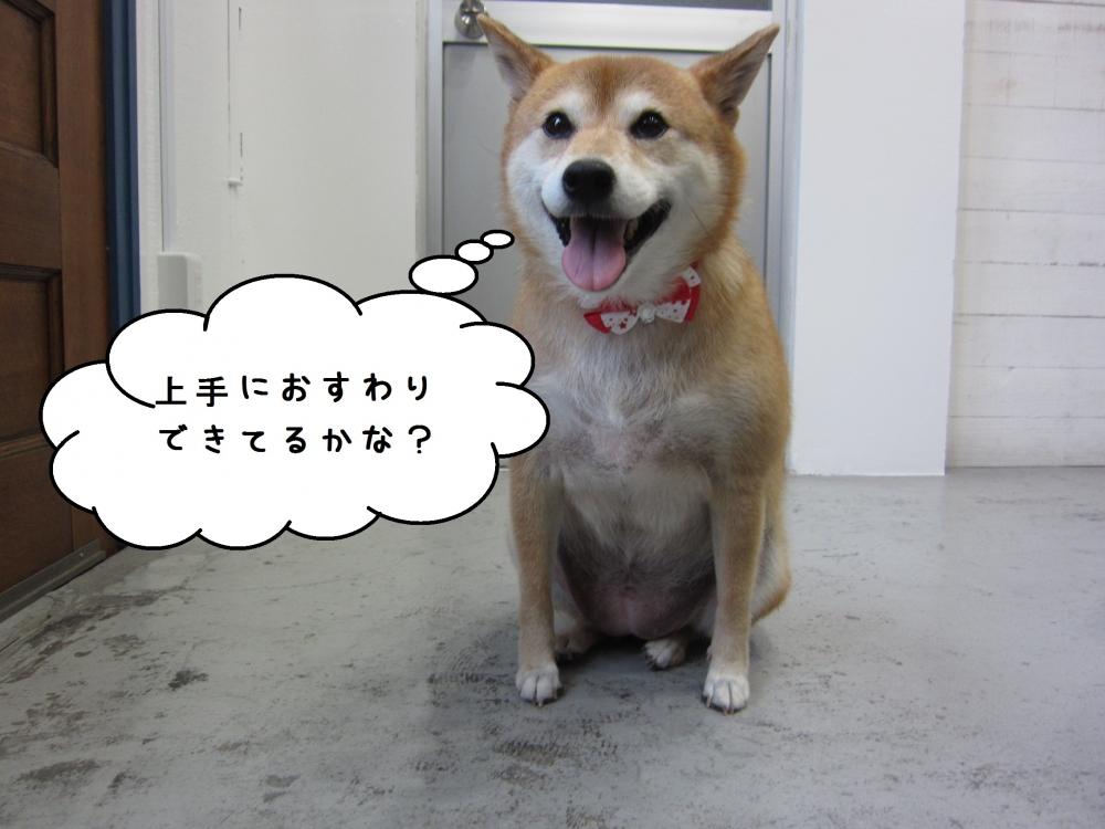 おすわり柴犬