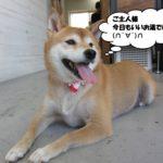 くつろぎ柴犬