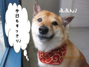 微笑む柴犬