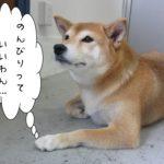 のんびり柴犬