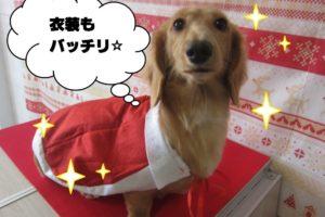 サンタさんミニチュアダックス