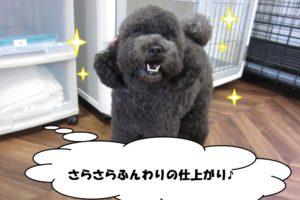 笑顔トイプードル