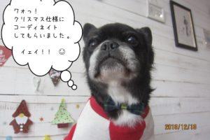 クリスマスミックス
