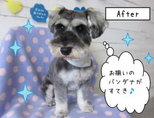AfterMシュナ