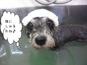 お風呂Mシュナ