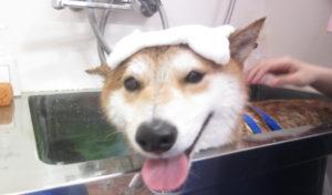 お風呂しば